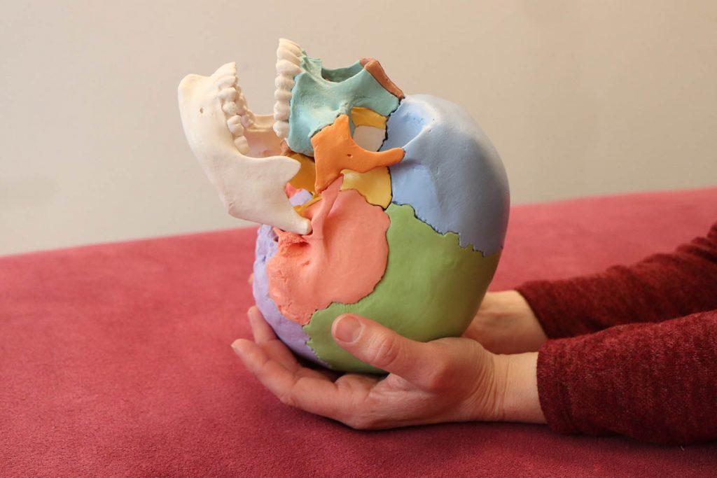 Cranio Sacral Therapie mit Kerstin Gertz